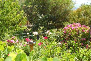 Villa Alba Dolce Appart jardin sud 1
